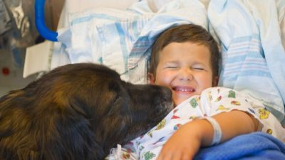 malattie che il cane è in grado di prevedere