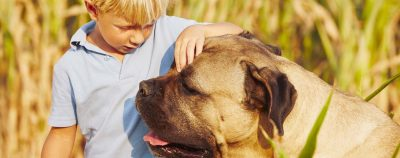 Vuoi avere fiducia dal cane?
