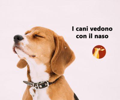 I cani vedono con il naso