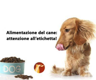 Alimentazione del cane: attenzione all'etichetta!
