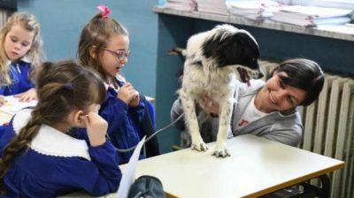 Cane in classe: gli effetti benefici sui bambini