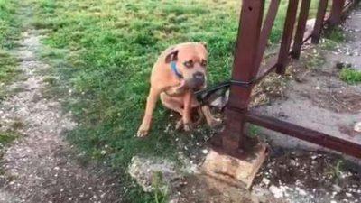 Abbandonare il proprio cane