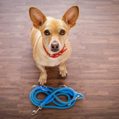 pettorine, guinzagli e accessori per cani