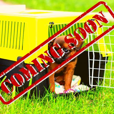 Trasportini e gabbie per cani